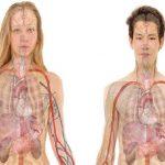 7 órganos no vitales del cuerpo humano