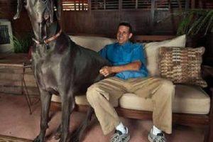 Raza de perro grande y gigante