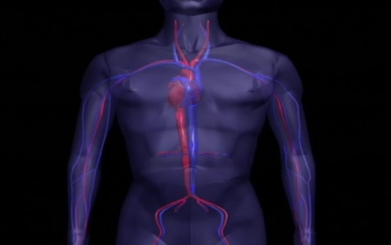 El estrés está relacionado con enfermedades autoinmunes