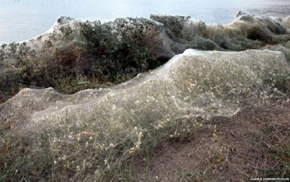 Una telaraña de 300 metros de largo en el poblado griego de Aitoliko que cubrió casi completamente un área de una extensa vegetación.
