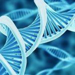 ADN mitocondrial de una planta es modificado por primera vez