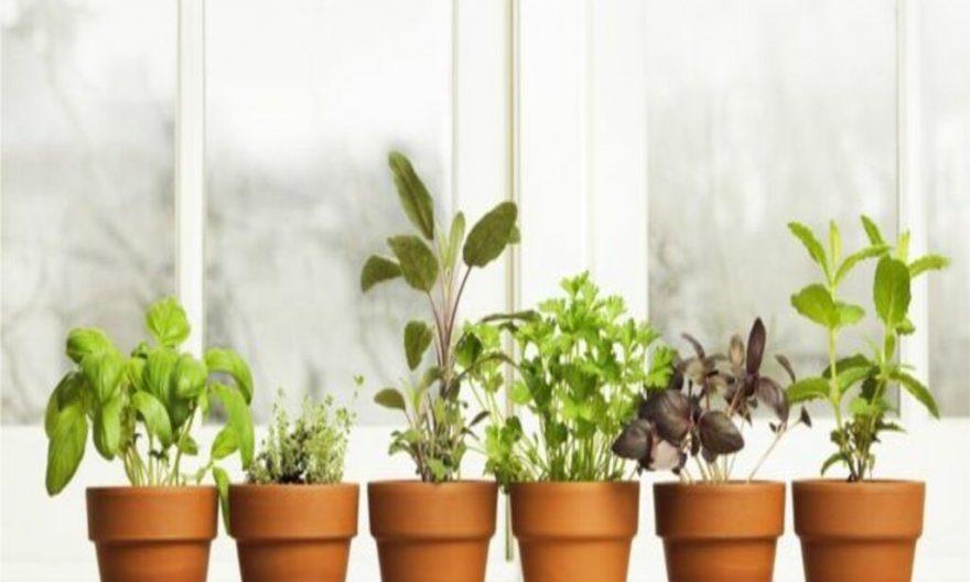Las plantas medicinales pueden ser muy útiles para estos 4 problemas de salud