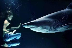 Los humanos y los tiburones. ¿Si no somos su plato favorito por qué nos atacan?