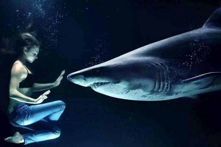 Persona y tiburón