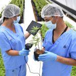 bioquímicos con planta medicinal