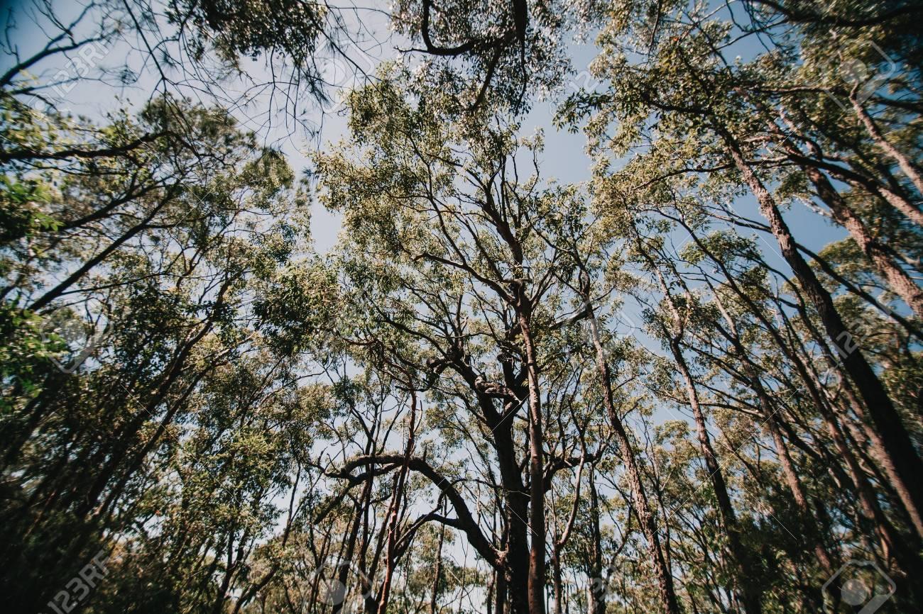 Tecnología de infrarrojos salva a un niño perdido en el bosque australiano