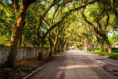 Avenida Magnolia