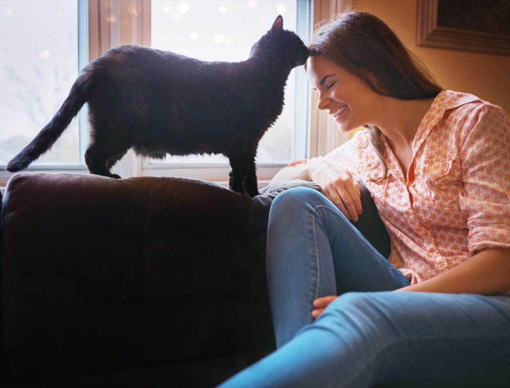 Los gatos. Gato lamiendo a su dueña
