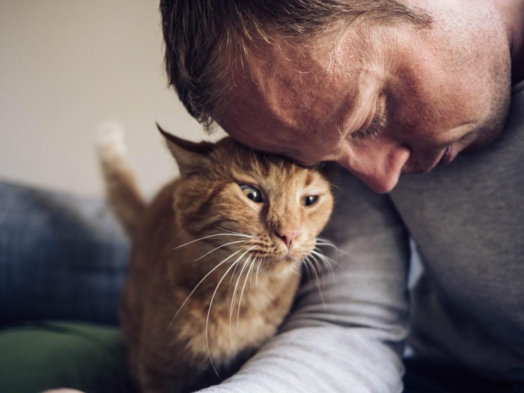 Gato golpeando la cabeza de su dueño