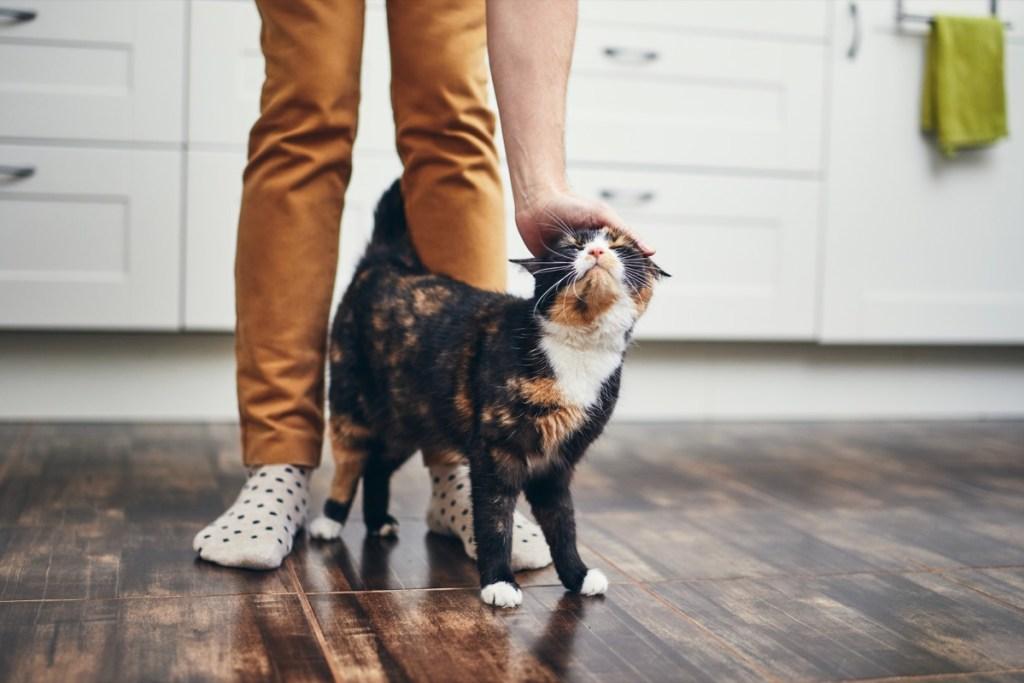 Gato en los pies de su dueño