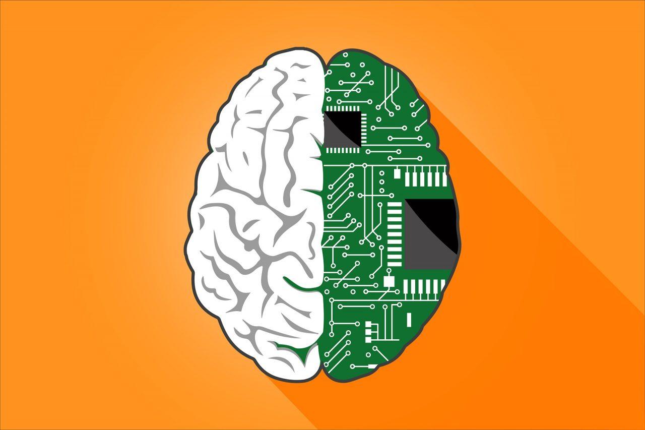 El cerebro adulto codifica sus experiencias visual y verbalmente