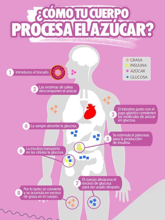 Como procesa tu cuerpo el azucar
