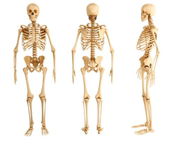 curiosidades de los Huesos humanos