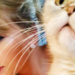 Taylor Swift, con un gato