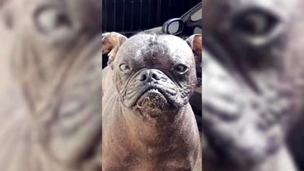 Imagen de perro que forma parte de la lista de TikTok Videos Famosos