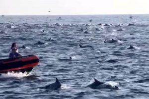 Delfines de Miami