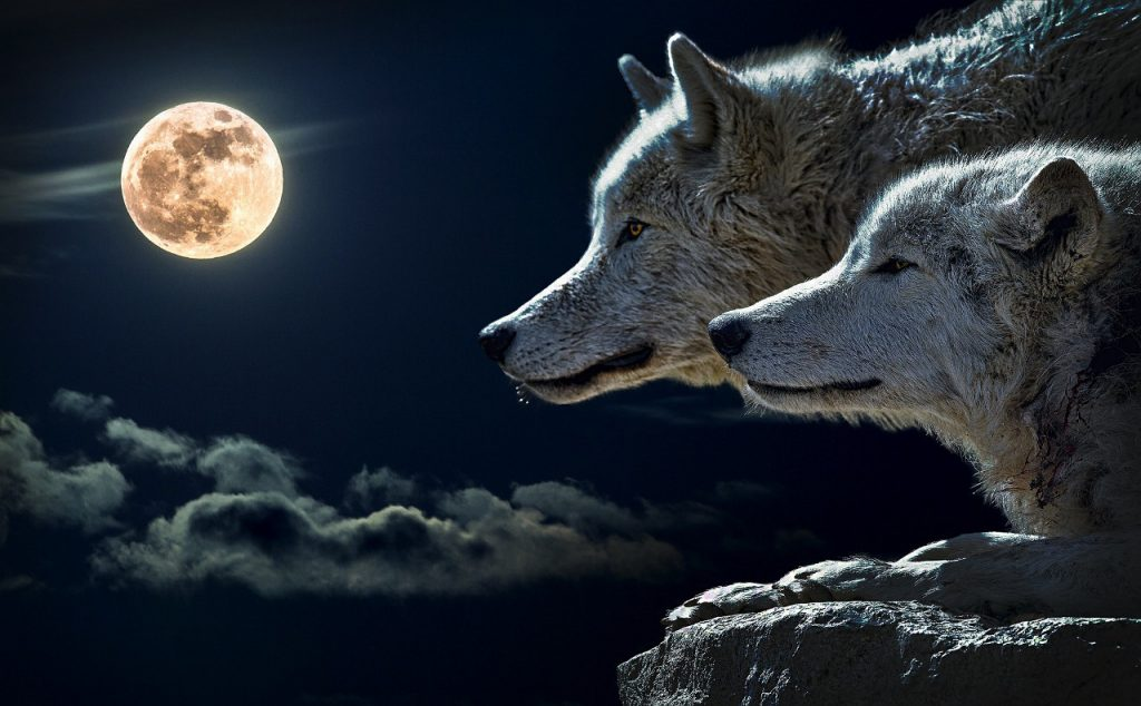 Luna Llena a Cuarto Menguante