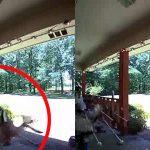 video muestra ciervo