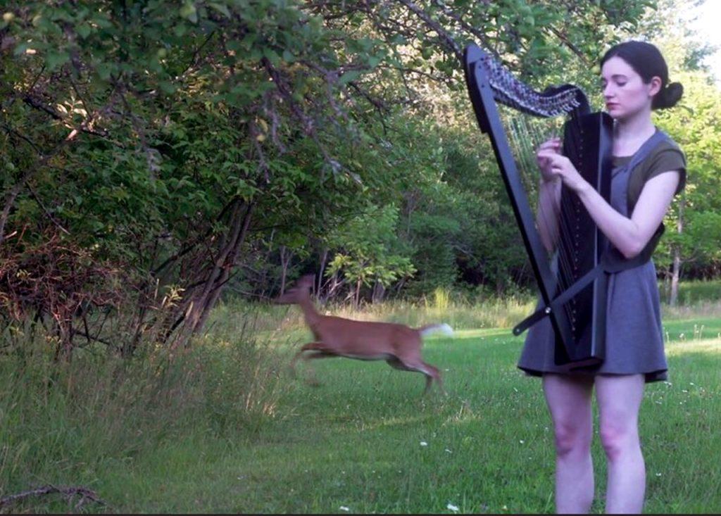 cómo hipnotizar a un ciervo con un arpa