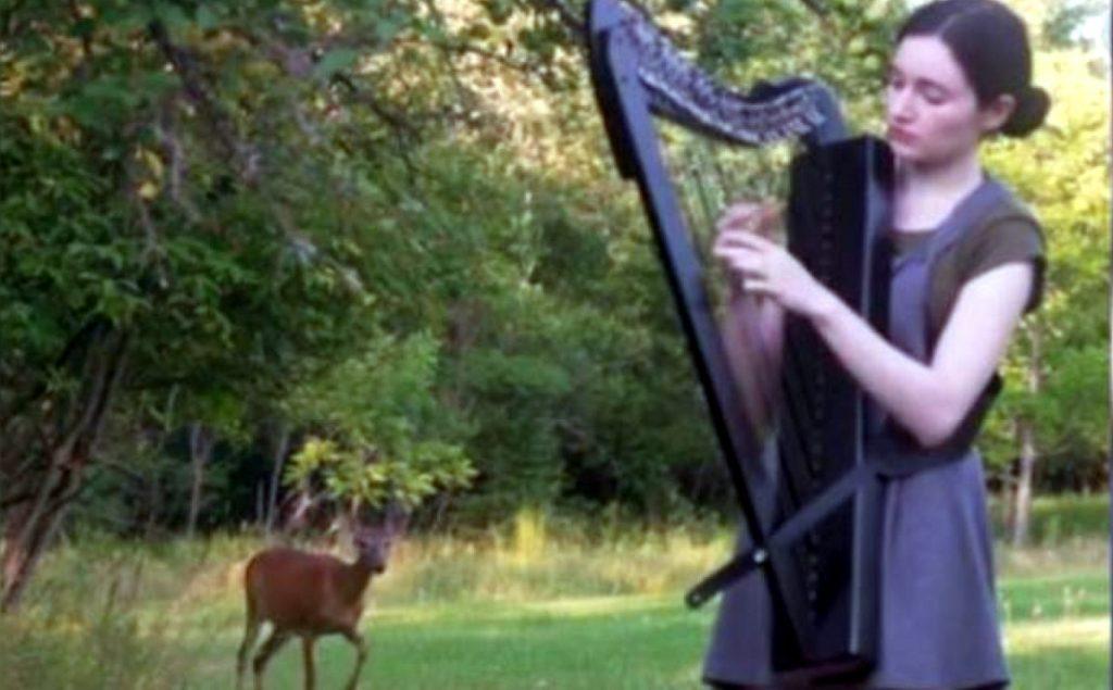 video en el que un arpa atrae un ciervo