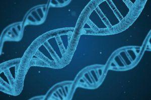 ADN de cuatro hebras