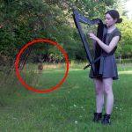 arpa atrae un ciervo