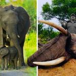elefantes muertos en Bosuana