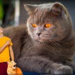 gatos más grandes del mundo