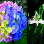 venenosas plantas de jardín