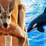 animales que más saltan