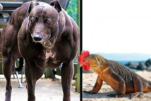 Animales creados