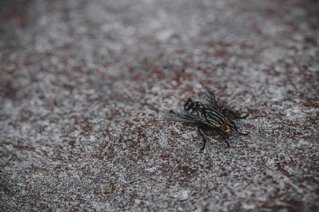 las moscas son tan molestas 2