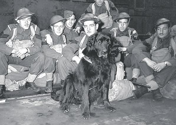 animales que han sido condecorados por el ejército 4