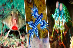 Diez animales que no sabías que existían