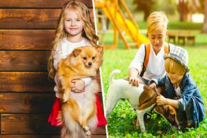 Las mejores razas de perros para alérgicos