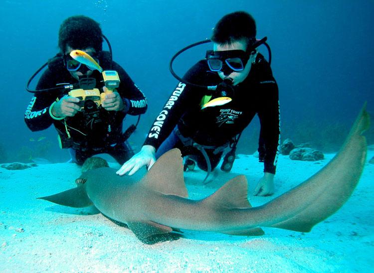 Ataques de tiburones 1