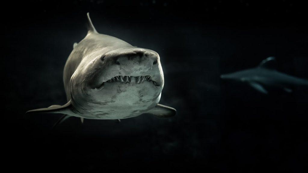 Ataques de tiburones 4