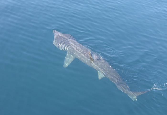 Ataques de tiburones 3