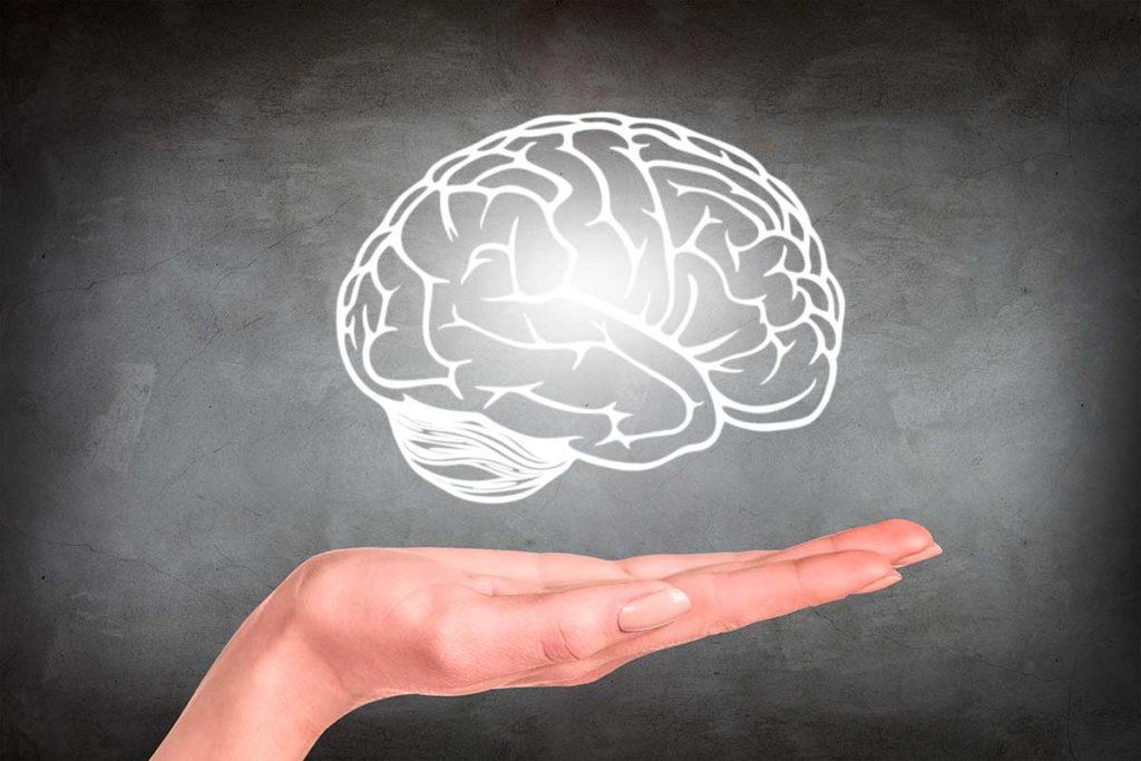 cerebro humano 5