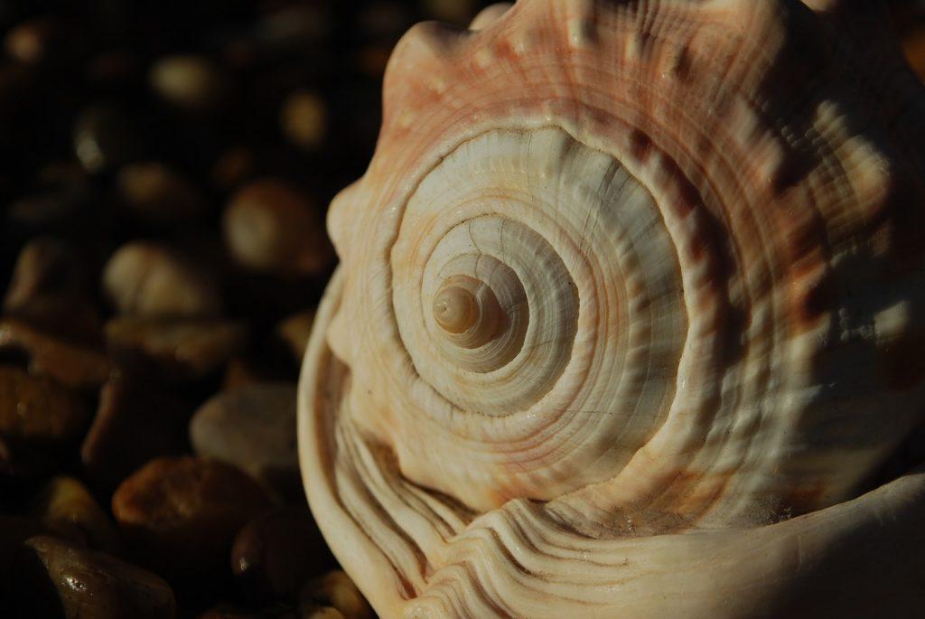 Sucesión de Fibonacci 2
