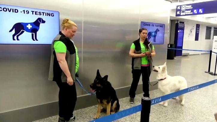 perros que pueden detectar la Covid-19