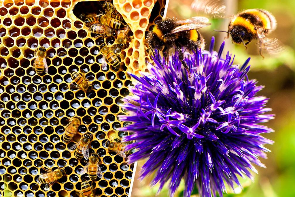 lo que no sabias de las abejas