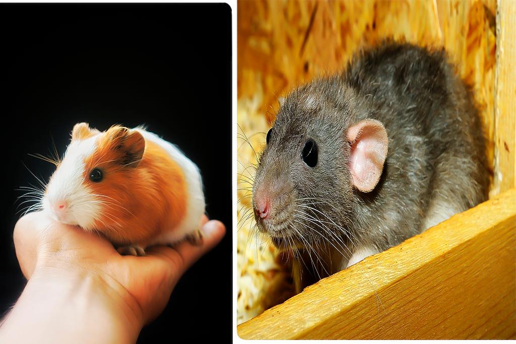Todo indica que los ratones desaparecerán para siempre y no podrás creer el por qué