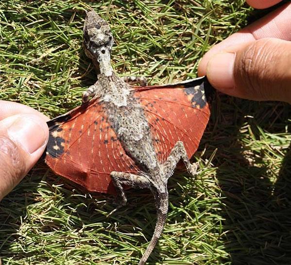 dragones voladores 2